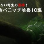 容赦ない野生の恐怖!動物パニック映画10選